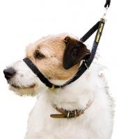 Canny Collar výcvikový obojek - černý - velikost 1