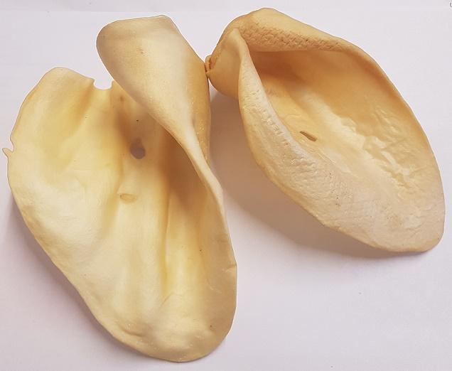 Hovězí ucho bílé 10 ks