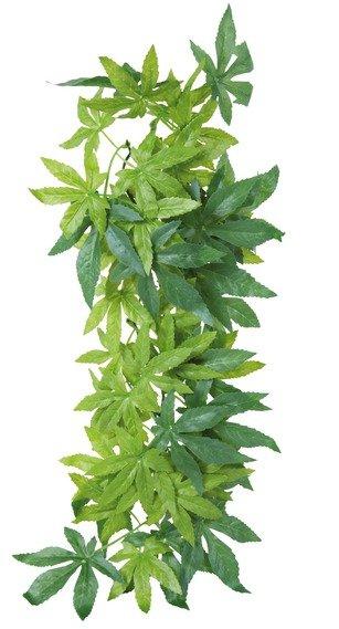 Rostlina EXO TERRA Abutilon střední 55 cm