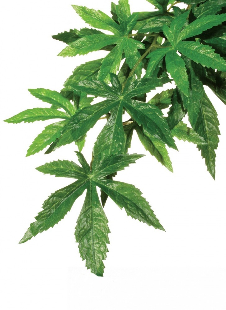 Rostlina EXO TERRA Abutilon velká 80 cm